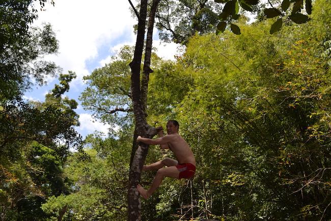 Фото из Тайланда - на дереве