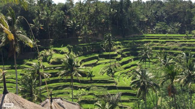 Bali00004